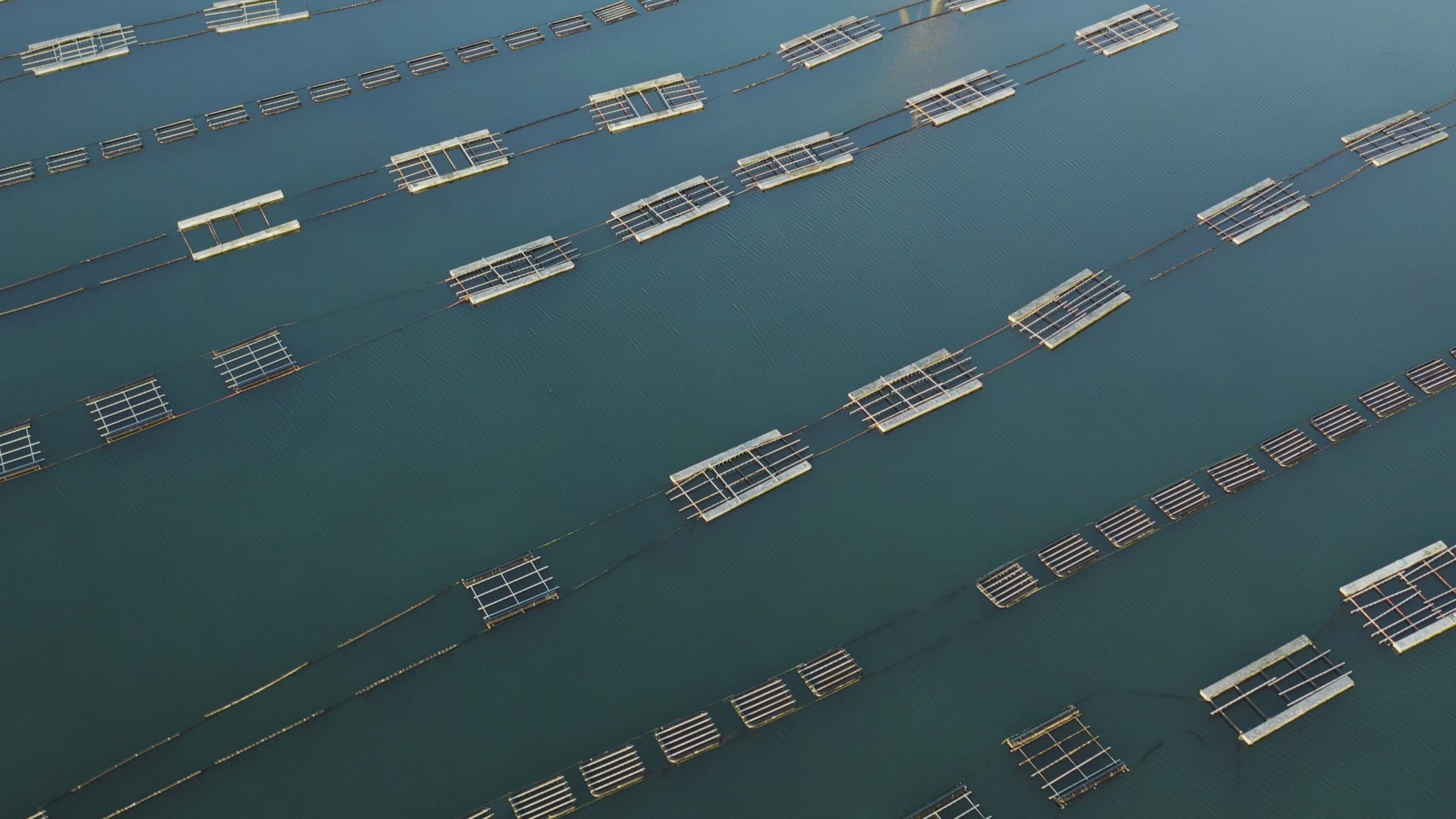 View From Above Of Fishing Mussel Farm In The Deep Blue Sea Ungraded